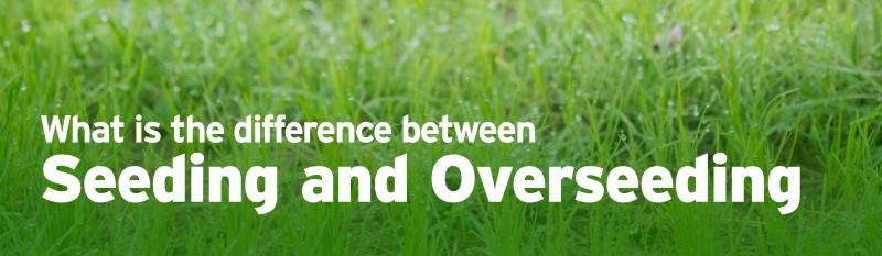 What's the difference between Seeding and Overseeding