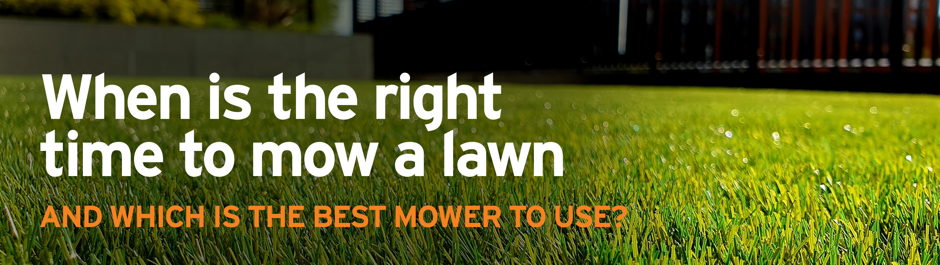 When, what height and with which kind of mower should you cut your lawn?
